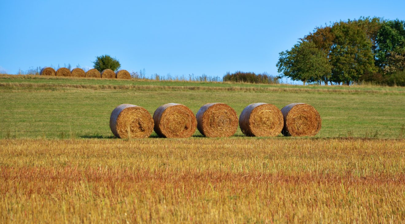 agriculture-bale-country-life-208095