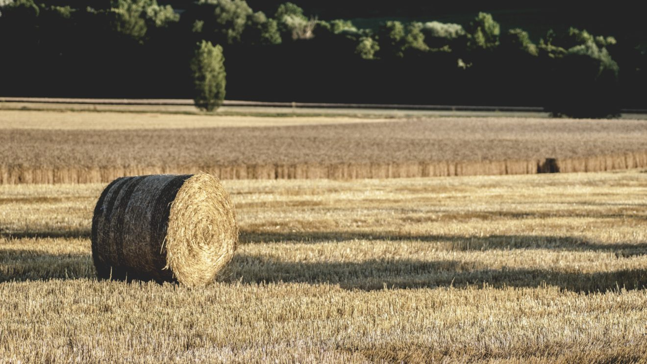 agriculture-country-countryside-539067